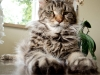 baiba-waiting-kittens-http-okeanas-lt-cats-html