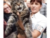 first-meilas-cat-show-winning-bos-in-maine-coon-sh
