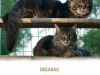 hierarchy-our-cats-http-okeanas-lt-cats-html