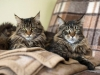 our-cats-http-okeanas-lt-cats-html